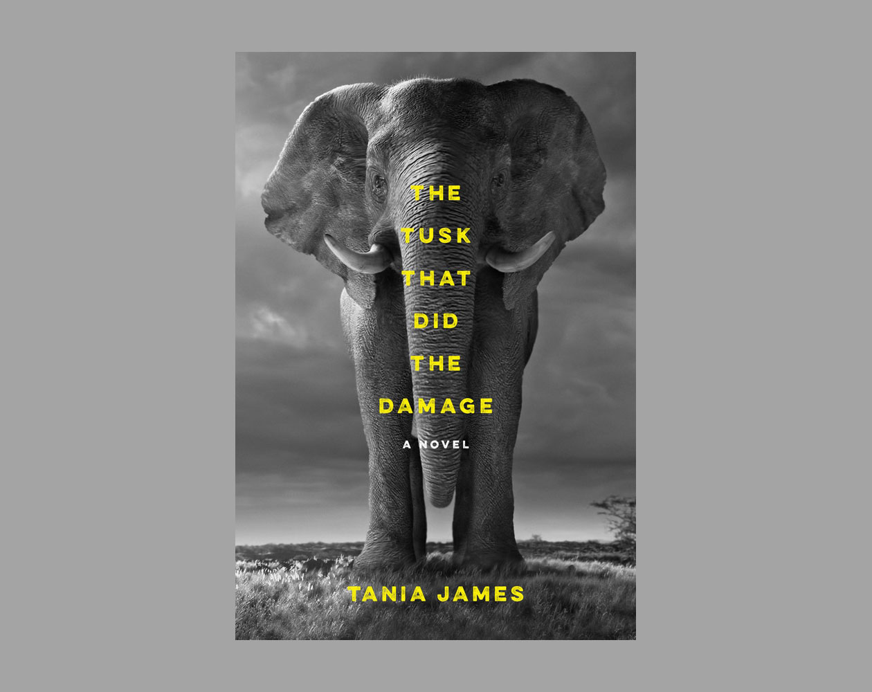 The 2016 tournament of books long list the morning news the tusk that did the damage by tania james buycottarizona Gallery