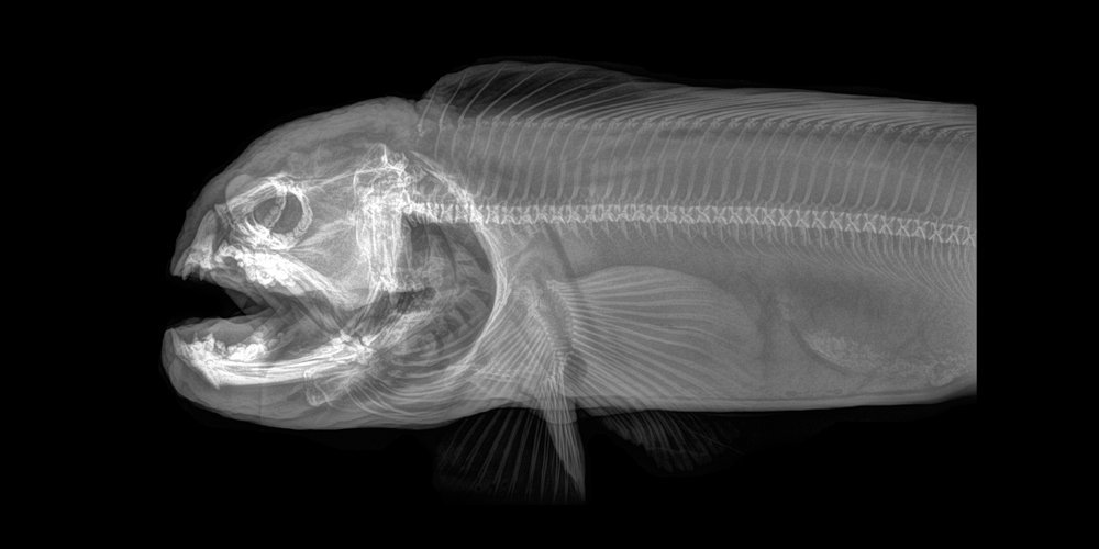"""The Oregon Zoo is posting X-rays that """"reveal the inner gothy beauty of animals."""""""
